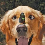 Do You Know How Well Your Dog Sees?